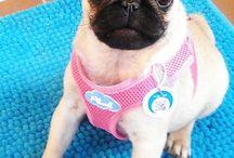 Our team / Psiastkarnia Pookie's Cookies to Paula & Matylda oraz psy: Forrest, Pookie & Lula i psiolubna kota Mruczka :) Nasze psy jako pierwsze próbują psiastek z naszych zasobów; testują dzielnie psiastka (ciastka dla psów), psiafiny (muffiny dla psów) i psiastkejki (torty dla psów) Jest między nimi wielka miłość!