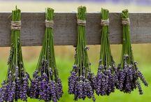 Zdravie - bylinky