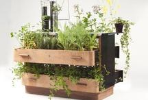 Portable Gardens for Garden to Table project