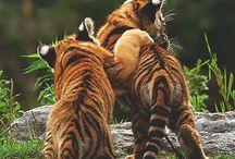 animals - zvieratká
