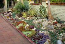 Ogrody z kaktusami