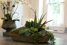 orchids and indoor flower pieces