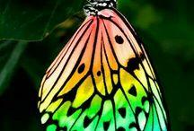kelebekler ve böcekler