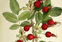 Owoce w grafice