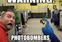 Caution: Parrot at Work / Penny, our blue & gold macaw and bird-in-charge at GreatCompanions.com.