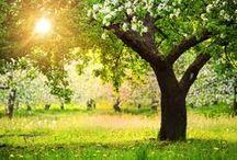 i miei alberi-my trees