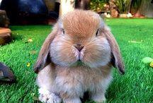 #chubby bunny