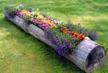 Blumenbaumstamm