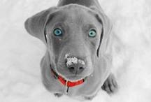 puppies / by Haley Jordan