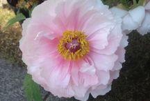 Flower  / by kumanopii