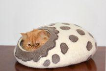 cuccia gatti
