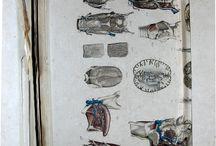 APADRINAT! Bourgery, J. M. (Jean Marc), 1797-1849 [Anatomie élémentaire / Bourgery et Jacob] / Arrel de la col·laboració entre Jean Marc Bourgery i l'il·lustrador Nicolas Jacob va néixer una obra cabdal de l'anatomia del segle XIX, l'Atlas d'anatomie humaine et de chirugie, una obra en 8 volums que es va editar entre 1831 i 1854 en forma de facsímils.