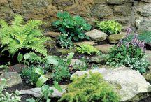 Jardin / Aménagement