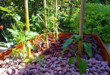 Nature, garden