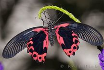 Flutter / by Darlene Stewart