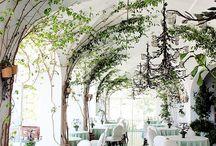 trees indoors