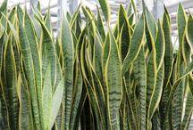 plantas da mirian Lopes