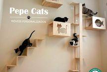Traseu pisici