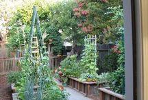 Vegetable gardening / Moestuin