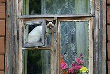 the house of fiction has many windows