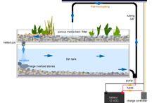 My aquaponic project