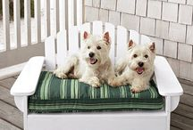 Westies / by Star Schott