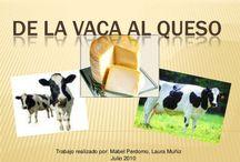 de la leche al queso