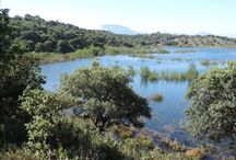 Archidona / Birds of Archidona. Mountains, woods, lakes and rivers together. Birdwatching tours (Costa del Sol, Malaga, Andalucia, Southern Spain)