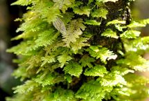 all about moss