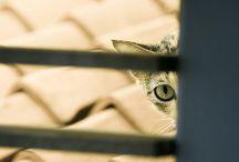 Mi debilidad / preciosas fotos de gatos y perros de aquí y de allá