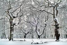 The forest in winter / The forest in winter