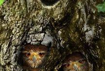 Owl mania