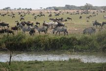 Park Narodowy Serengeti (Tanzania)