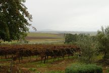Clovelly Wine Estate / The beautiful historical town of Stellenbosch lies at the centre of South Africa's premier wine-producing area and boasts a winemaking tradition that goes back to the beginning of the 17th century.   http://www.go2global.co.za/listing.php?id=2243&name=Clovelly+Wine+Estate+