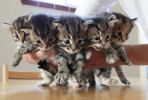 I want all of them.