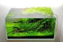 Aquarium planted setup