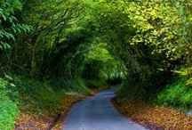 Tree Tunnels and Allees / by Trees