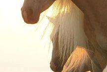 Love horses / Hest