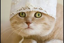 cats in hats / Cats in hats, duh, and other things, and other animals, but mostly cats. In hats. / by Sandi Davis