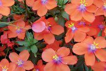 Blooms - simple flowers