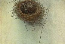 Vintage feathers nest etc / by Margaret-Anne Carels