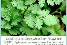 Mercury in teeth