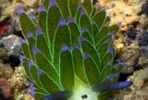 psychedelic sea creatures