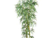 TREE/PLANT RENDERS