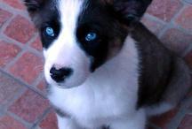 Nukka y otros perritos / Nukka ha pasado a formar parte tan intensa de nuestras vidas que ya es la reina en casa. La adoptamos el 21 de noviembre de 2011.