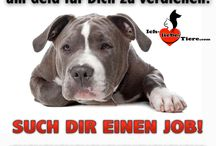 Tiere❤