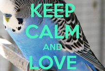 Only parrot thinks...