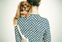 Dogs & fashion