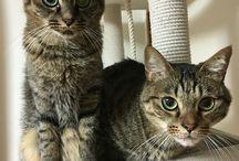 My cats / Chibi and Ryan