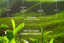 Tea Curiosity / Info-graphics to help you understand tea a bit better.